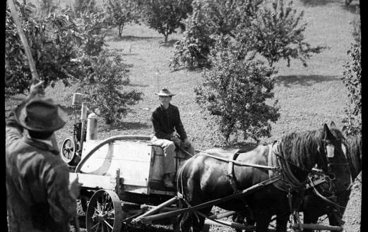 Spraying an orchard, 1922. Photo courtesy of Our Hanford History.
